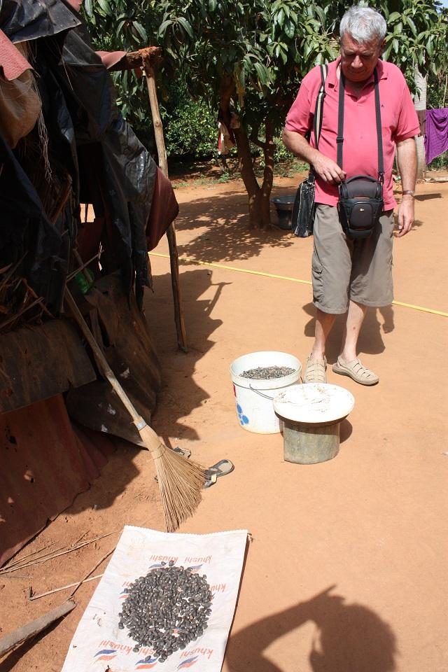 Récolte de graines de Moringa