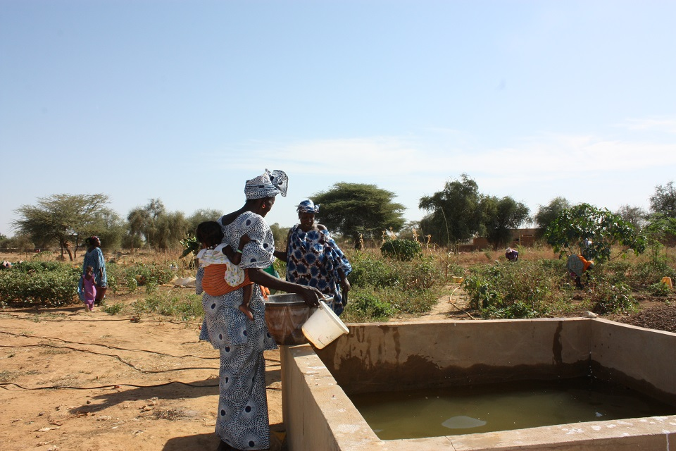 ARROSAGE A LA BASSINE : FEMMES COURAGE !