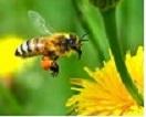 pour nous aider cliquez sur l'abeille !